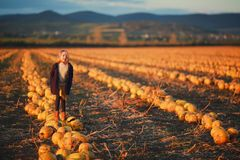 Girl in dark blue coat and orange skirt stands on pumpkins on the field on sunset. Halloween. Beautiful landscape in stock images