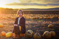 Girl in dark blue coat sits on a pumpkin on the field on sunset. Halloween royalty free stock photo