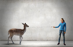 Girl with deer. Young woman in casual holding deer on lead Royalty Free Stock Images