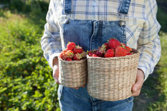 Girl in denim clothes with strawberry baskets in a sunny summer Stock Photography