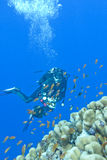 Girl diver and coral reef in tropical sea, uinderwater Royalty Free Stock Photography