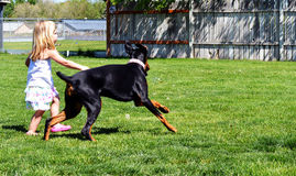 Girl and doberman running Royalty Free Stock Photo