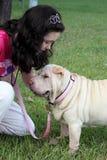 Girl with dog. Shar pei dog with teen girl on leash Stock Image
