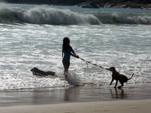 Girl&dog. Pet training at the beach stock photos