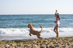 Girl and dog. Little girl play on the sea coast with her dog stock photos