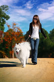 Girl with dog. A beautiful Asia girl with samoyed Stock Photography