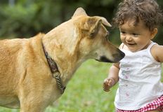Girl and Dog. Infant and family dog staring at each other Stock Images