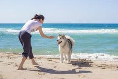Girl dog beach Stock Images