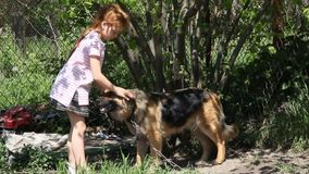 A girl with a dog. Beautiful red-haired girl petting a dog stock video