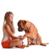 Girl and dog bullmastiff Stock Image