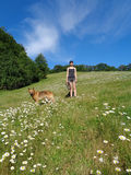 Girl with dog among chamomile field royalty free stock photography