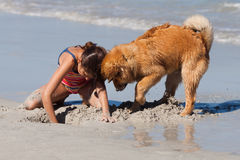 Girl and dog digging together a hole in the sand Stock Image