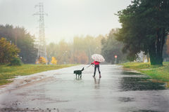 The girl with a dog goes through the puddles. The girl in a red jacket with an umbrella goes through the puddles with her dog in the rain Royalty Free Stock Photography