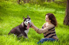 Girl and dog Husky in green grass Royalty Free Stock Photo