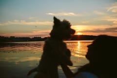 Girl and dog on the lake. On sunset background Royalty Free Stock Image
