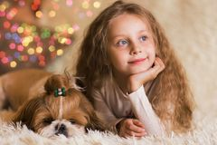 Portrait of thoughtful girl with long hair with a puppy Shih Tzu. Girl and dog lying on a couch royalty free stock image