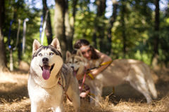 Girl with dog. In park Stock Photography