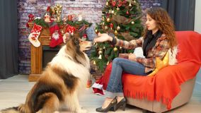 Girl with a dog playing near a Christmas tree. Girl sitting in a chair and playing with a dog.Near the fireplace there is a decorated Christmas tree. The hostess stock footage