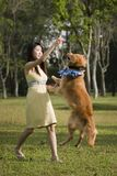 Girl with dog playing outdoor Stock Photography