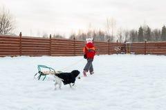 Girl and dog sledding in backyard Stock Image