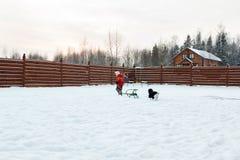 Girl and dog sledding in backyard Royalty Free Stock Photo