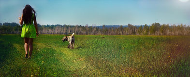 Girl with a dog in the summer on a meadow at noon. Image of a girl walking with a dog on a sunny day on a green lawn Stock Photos