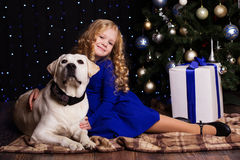 Girl and dog together at home, christmas concept Stock Photos