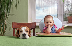 Girl with a dog waiting for dinner Royalty Free Stock Photos