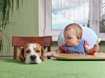 Girl with a dog waiting for dinner Royalty Free Stock Image