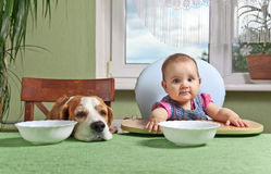 Girl with a dog waiting for dinner Stock Photos