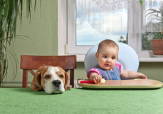 Girl with a dog waiting for dinner Royalty Free Stock Images