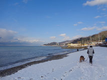 Girl with a dog walk along snow-covered beach royalty free stock images