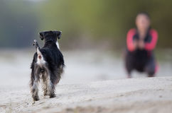 Girl with dog walking on the beach Stock Image