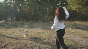 Girl with dog walking in the woods stock footage