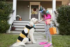 Girl With Dog Wearing Halloween Costumes For Trick Or Treating stock photos