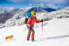 Girl with dog in winter mountains. Stock Images