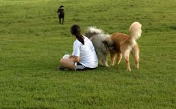 Girl with dogs Royalty Free Stock Images