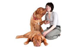 Girl with dogs Stock Images
