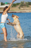 Girl with dogs. Young woman playing with the male dog of Labrador in the sea on the background of the seashore Stock Photos