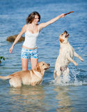 Girl with dogs. Young woman playing with two dogs of Labrador in the sea near the seashore Royalty Free Stock Photo