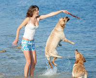 Girl with dogs. Young woman playing with two dogs of Labrador in the sea Royalty Free Stock Image