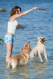 Girl with dogs. Young woman playing with two dogs of Labrador in the sea Stock Photography