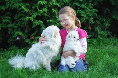 Girl with dogs. Girl playing with the dogs in the garden Stock Image