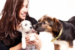 Girl and dogs. Young woman play with two dogs, studio shot Royalty Free Stock Images