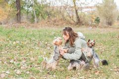 Beautiful young girl with her Yorkshire terrier dog puppy enjoying and playing in the autumn day in the park selective focus stock photography