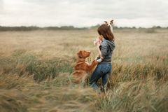Girl with dogs in the field. royalty free stock photography