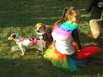 A girl with dogs during a gay pride party stock images