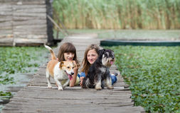 Girl with dogs Royalty Free Stock Photography