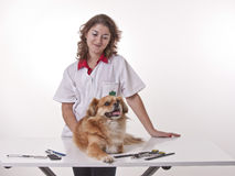 Girl doing a manicure to a dog. Royalty Free Stock Image