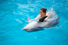 Girl and the dolphins Stock Images